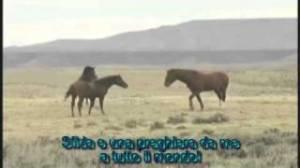 Wild Horses - Rolling Stones